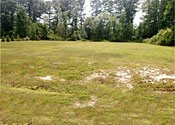 Buildable .77 Acre Lot